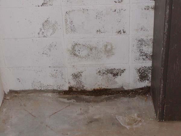 Marvelous Api_basement_moistur.